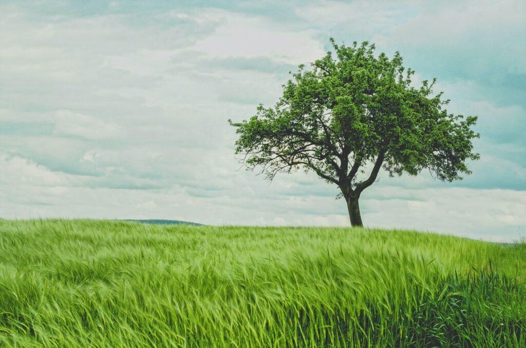 Affiliate Marketing Secrets - Fruitless Tree